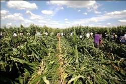 Procès de militants anti-OGM: jusqu'à trois mois de prison ferme requis