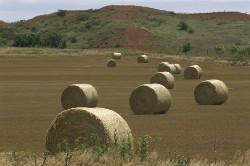 Un minimum retraite pour les agriculteurs