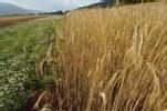 Les agriculteurs autorisés à utiliser les terres en jachère pour nourrir leur bétail