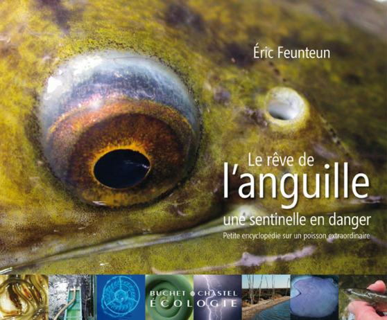 Le rêve de l'anguille : une sentinelle en danger