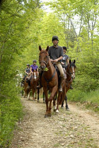 Partenariat entre la FFE et l'ONF pour organiser l'accueil et l'information des cavaliers en forêt domaniale