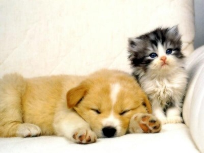 Plus de 2,5 millions de chats et de chiens !