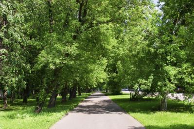 Espaces verts : la clé du bonheur des citadins