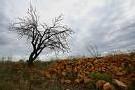 Alerte 'orange' aux orages sur cinq départements du Sud-Ouest