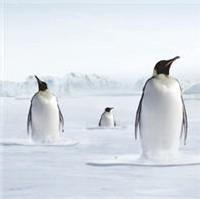 L'Angleterre sur le point de revendiquer la propriété d'une belle portion de l'Océan Antarctique