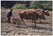 Les prix des produits agricoles resteront élevés et volatils selon l'OCDE et la FAO
