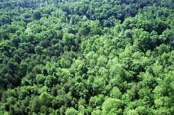 La protection des forêts contre l'incendie en 2008