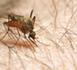 Plus de 350 jeunes en Service Civique mobilisés pour lutter contre l'épidémie de Dengue aux Antilles françaises