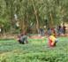 Le FIDA fait un don de 51,16 millions d'USD au Burkina Faso pour l'amélioration de la sécurité alimentaire des ruraux pauvres