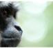 Chanee et les singes chanteurs, une histoire racontée par Muriel Robin dimanche 3 mars 2013 sur France 2