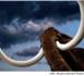 Du 14 avril au 11 novembre, les mammouths débarquent au musée départemental de préhistoire d'Ile-de-France !